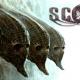 Scorn Demo PC Latest Version Game Free Download
